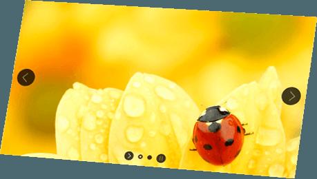 Tablet Hintergrund Marienkäfer